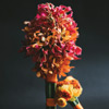 Bright and Beautiful Bouquets