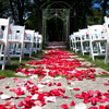 Simple white chairs and an aisle of red, pink and white rose petals