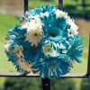 White and neon blue gerbera daisy bouquet