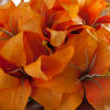 Orange lilly bridal bouquet