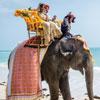 Enchanting Elephant Ride