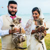 Newlyweds and Baby Tigers